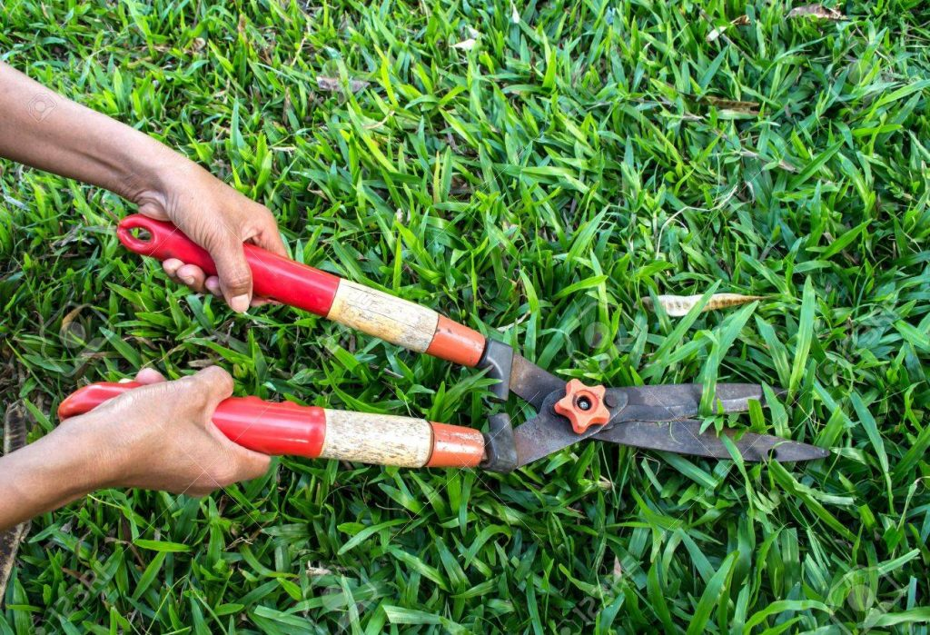 A Complete Guideline To Cut Grass Without A Lawnmower Shears